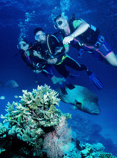 Discover the underwater world of Agincourt Reef | Great Barrier Reef Port Douglas