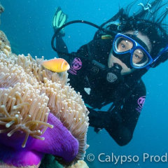 Dive Cairns | Great Barrier Reef Tour