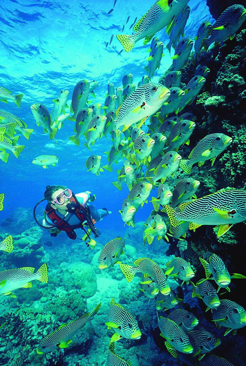 Cairns attractions night diving cairns great barrier reef australia cairns attractions - Dive great barrier reef ...