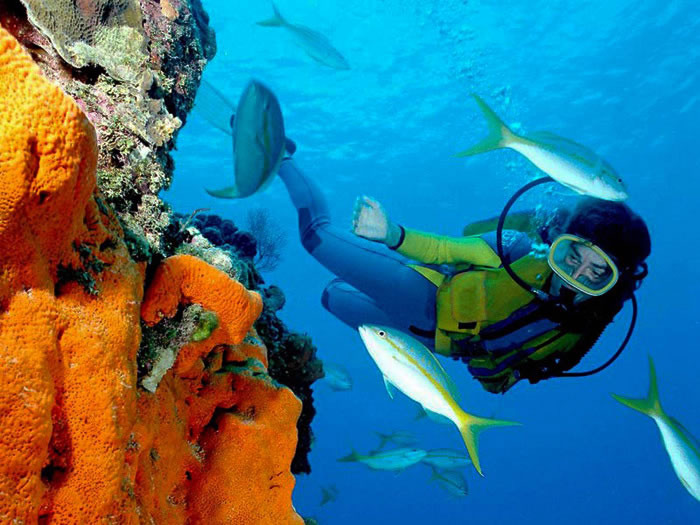 Cairns attractions cairns scuba diving cairns attractions - Dive great barrier reef ...