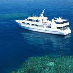 Dive the Cod Hole Great Barrier Reef 5 star luxury