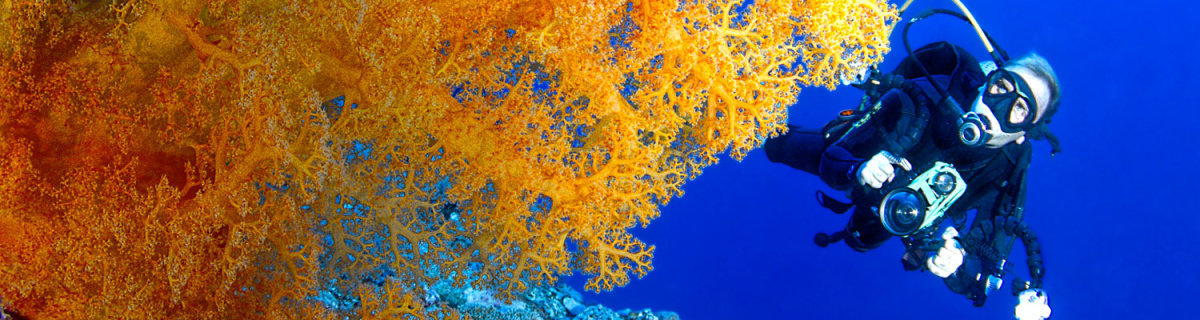 Dive the magnificent Great Barrier Reef in Australia