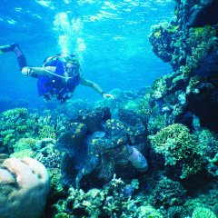 Dive tours Cairns