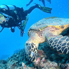 Scuba Diving with Turtles on the Great Barrier reef from Cairns
