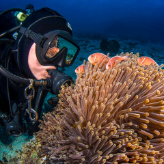 Diver Up Close with Coral on the Great Barrier Reef - Cairns Dive Tour