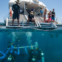 Divers in the water on the back of the luxury boat on the Great Barrier Reef