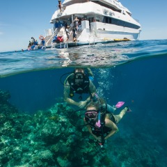 Diving On The Great Barrier Reef Australia | Full Day Reef Trip Ex Cairns