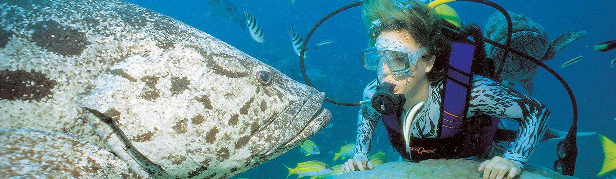Diving Tours on the Great Barrier Reef