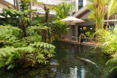 Barramundi Pond in the Doubletree by Hilton Cairns