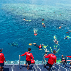 Dreamtime Dive & Snorkel | Snorkel The Outer Great Barrier Reef & Learnt About The Great Barrier Reef Creation Story