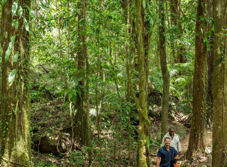 Dreamtime Walk - Daintree Rainforest Combo Tour