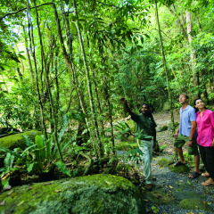 Dreamtime Walk Mossman Gorge - Port Douglas Combo Tour