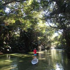 Easy Paddle Boarding Tour On The Mossman River | Departing From Port Douglas In Tropical North Queensland