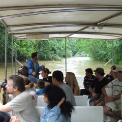 Eco Accredited 1 Hour Daintree River Cruise | 1 Day Daintree Tour | Tropical North Queensland