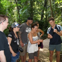 Eco guided Daintree Rainforest tour