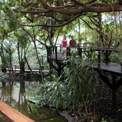 Elevated boards walks, rainforest immersion and Jungle surfing Daitnree Rainforest