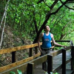 Elevated boardwalks in the Daintree Rainforest