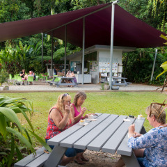 Enjoy a barbeque luncheon in the Daintree Rainforest