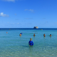 Enjoy A Day Snorkelling On Forbes Island | Cruise Queensland