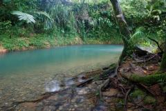Enjoy a refreshing swim at Coopers Creek - Daintree Cabin & Spa Lodge
