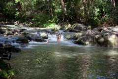 Enjoy A Refreshing Swim | Take A Day Trip To The Daintree Rainforest To Understand This Beautiful And Fragile Ecosystem