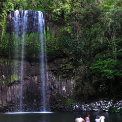 Enjoy a swim at Millaa Millaa falls