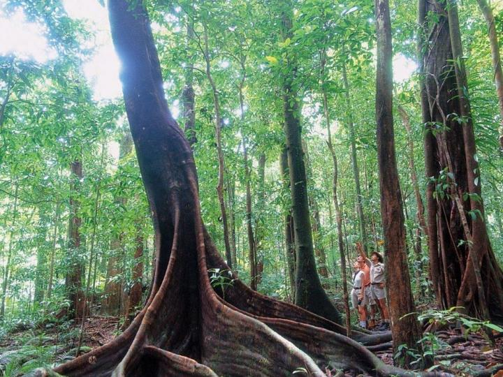 Enjoy the beauty of the Rainforest - Silky Oaks Lodge