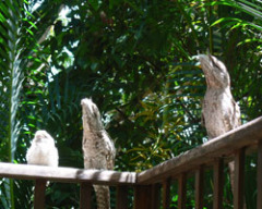 Enjoy the local wildlife - Milkwood Lodge Cooktown Accommodation