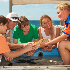 Enjoy the Touch Tank presentation with the marine naturalist