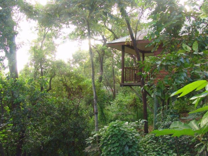 Rainforest Resorts Cairns - Eucalypt Bungalow at Thala Beach Lodge