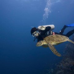 Sea Turtles | 2 Day 1 Night Private Liveaboard | Unlimited Certified Dives