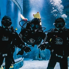 Experience of a life time | Cairns dive with the sharks