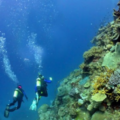 Experienced scuba divers on the Great Barrier Reef