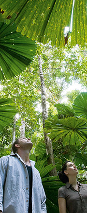 Explore Daintree & Cape Tribulation