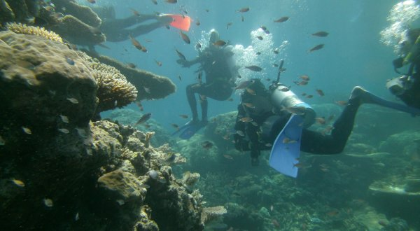 Explore pristine outer reefs scuba diving from Cairns on the Great Barrier Reef in Australia