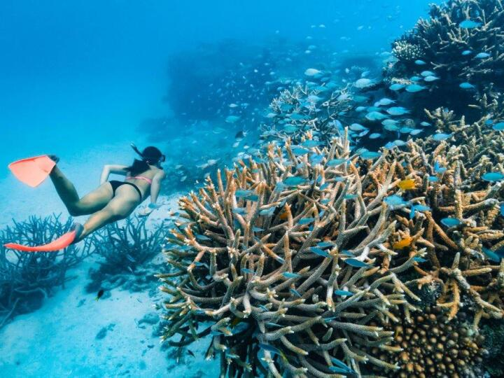 Explore the beauty of the Great Barrier Reef