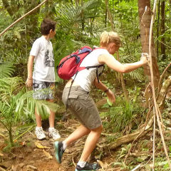Explore The Daintree Rainforest | Private Tour | Small Group