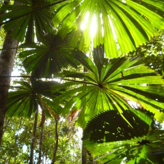 Explore The Daintree Rainforest | 11 Day Camping Safari IN The Australian Outback