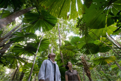 Explore the Daintree Rainforest