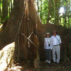Explore The Magnificent Daintree Rainforest | Full DAy Tour For Small Group Ex Port Douglas In Tropical North Queensland