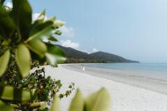 Explore the stunning natural beauty of Daintree, Cape Tribulation