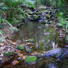 Mossman Gorge | Explore The Tropical North Queensland Fauna & Flora
