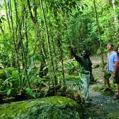 Explore the rainforest at Mossman Gorge