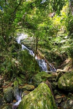 Expore Rainforest walks and swimming holes - Daintree Eco Lodge & Spa