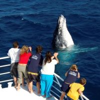 Eye spy with Humpback Whales Cairns