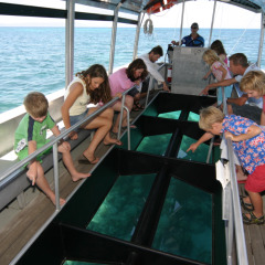 Families enjoying a glass bottom boat tour around Green Island