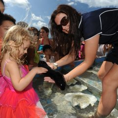 Perfect family friendly Great Barrier Reef trip from Cairns
