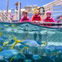 Family Fun Day On The Great Barrier Reef | Children's Swimming Pool