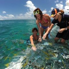Feed the fish on the Great Barrier Reef Cairns