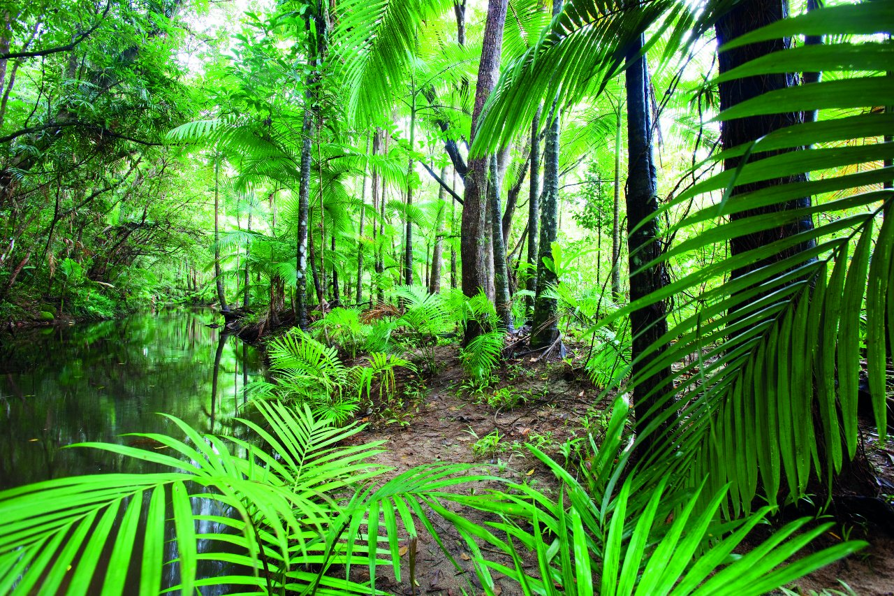 exclusive half day rainforest and waterfall 4wd adventure cairns